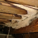 Mold Assessment - Mold in Attic
