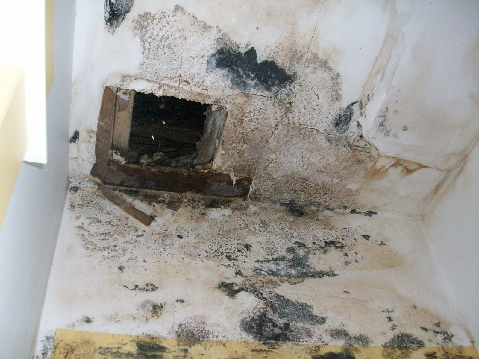 mold assessment report hometown builders. Black Bedroom Furniture Sets. Home Design Ideas