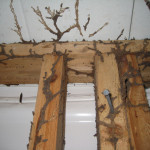 Termite and other Wood-Destroying Organisms -Subterranean